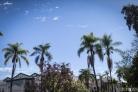 balboa park (38 of 108)