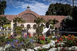 balboa park (7 of 108)