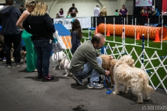 pet expo w (13 of 34)