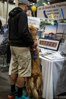 pet expo w (14 of 34)