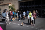 pet expo w (2 of 34)