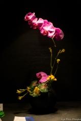 coronado flower show w (100 of 240)