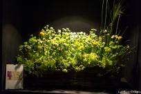 coronado flower show w (112 of 240)