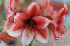 coronado flower show w (12 of 240)