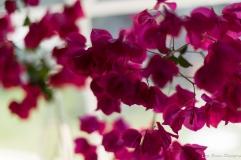 coronado flower show w (13 of 240)