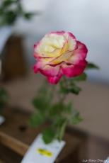 coronado flower show w (160 of 240)