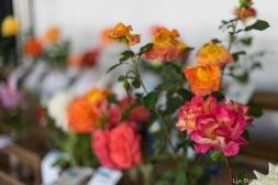 coronado flower show w (163 of 240)
