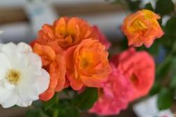 coronado flower show w (164 of 240)