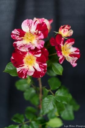 coronado flower show w (166 of 240)