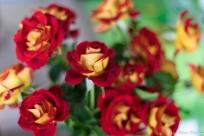 coronado flower show w (169 of 240)