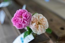 coronado flower show w (171 of 240)