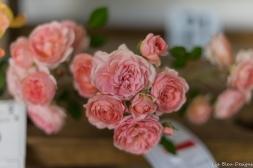 coronado flower show w (172 of 240)
