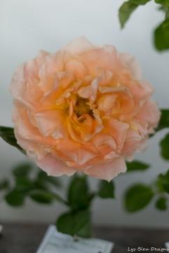 coronado flower show w (176 of 240)