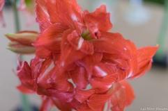 coronado flower show w (18 of 240)