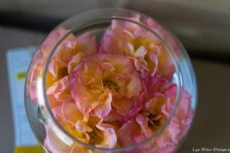 coronado flower show w (180 of 240)