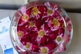 coronado flower show w (183 of 240)