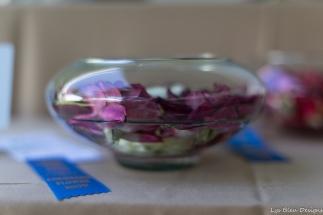 coronado flower show w (185 of 240)