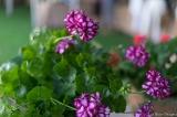 coronado flower show w (188 of 240)