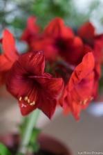 coronado flower show w (192 of 240)
