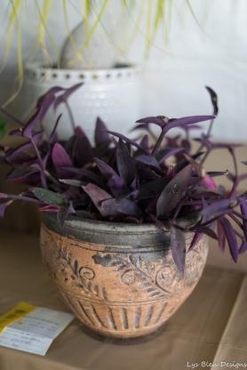 coronado flower show w (195 of 240)