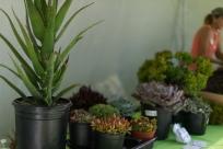 coronado flower show w (196 of 240)