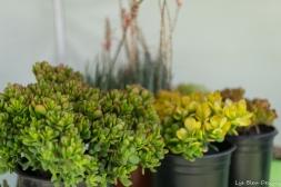coronado flower show w (200 of 240)