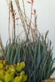 coronado flower show w (201 of 240)