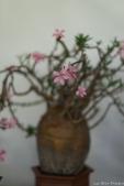 coronado flower show w (210 of 240)