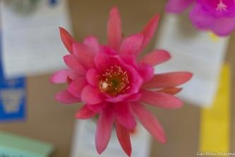 coronado flower show w (22 of 240)