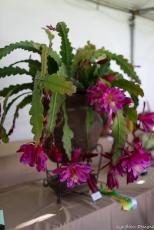 coronado flower show w (231 of 240)