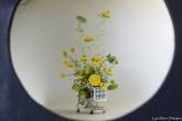 coronado flower show w (27 of 240)