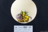 coronado flower show w (31 of 240)