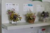 coronado flower show w (40 of 240)