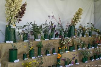 coronado flower show w (7 of 240)