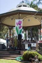 coronado flower show w (8 of 240)