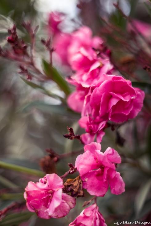 flowers w (1 of 1)