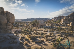 joshua tree w (3 of 10)